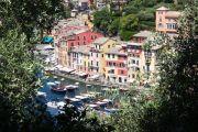 olive-trees-portofino