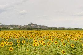 photo of San Miniato