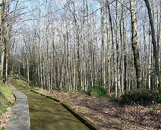 Path through the Casentino Forests around Camaldoli