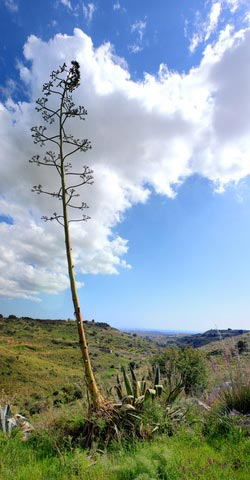 Countryside near Menfi in Sicily