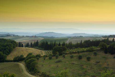 rolling countryside in Chianti
