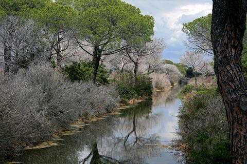 reclaimed marshes now forests in Maremma