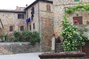flowers-in-village