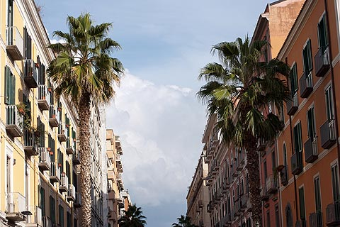 Palm trees in street in Salerno
