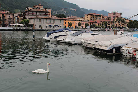 Swan and boats on Lake Iseo at Sarnico