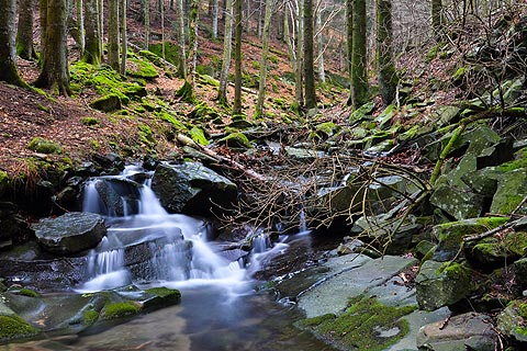 Series of waterfalls in woods near Vallombrosa