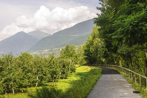 Cycle track through the Valtellina orchards
