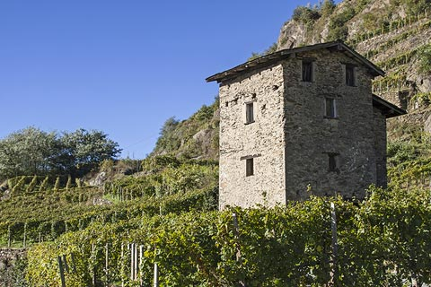 Vineyards and ancient tower building