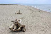 free-beach